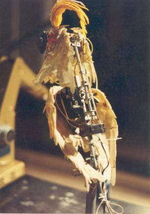 Animatronic servo driven Cockatoo had 5 axis's of movement: Head up/down Head left/right Crest up/down Mouth Body up/down