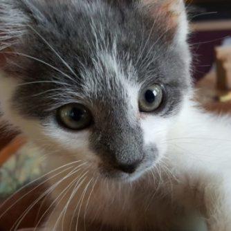 Leo Kitty